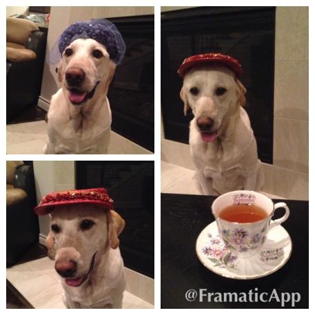Dante Tea
